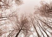 Bare branches — Stock Photo