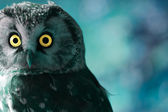 Boreal Owl at night — Stock Photo