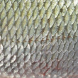 Stock Photo: Background fish skin