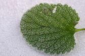 Frozen leaf — Stock Photo