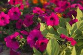 Jardim ao pôr do sol — Fotografia Stock