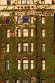 Windows of Hotel Covered in vines — Stock Photo