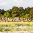Stock Photo: SeOats Between Beach and Marsh