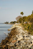 SeaWall Toward Walkways and Palm Tree — Stock Photo