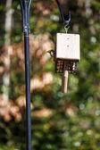 Vogel gluren uit feeder — Stockfoto