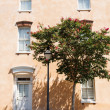 Crepe Myrtle by Lamp and Peach Stucco — Stock Photo