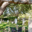 Cemetery Under Old Oak Tree — Stock Photo