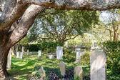 Begraafplaats onder de oude eik — Stockfoto