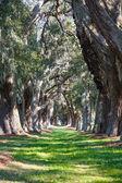Green Grass Between Oak Trees — Stock Photo