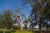 Old Oak Trees in Sunny Park — Stock Photo