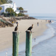 Two Seabirds on Posts Near Beach House — Stock Photo