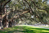 Oak Limbs over Green Grassy Lane — Stock Photo