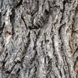 Old Gray Bark on Tree — Stock Photo #31198771