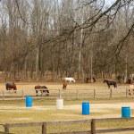 Many Horses in a Riverside Corral — Stock Photo