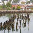 Birds on Pilings in Portland Harbor — Stock Photo