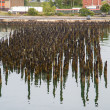 Many Old Pilings on Coast of Portland — Stock Photo #34274157
