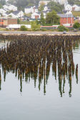 Many Old Pilings on Coast of Portland — Stock Photo