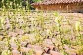 Weeds Growing Through Tile Pipe Roof — Stock Photo
