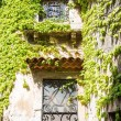 Stock Photo: Ivy Over Iron Scrollwork