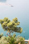Pine Tree Over Amalfi Coast — Stock Photo