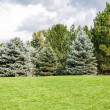 Pine and Fir Trees on Green Grass Hill — Stock Photo