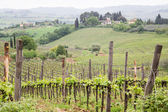 Homes Over Tuscany Vineyard — Stock Photo