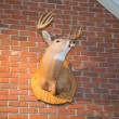 Deer Head on a Brick Wall — Stock Photo