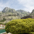 Shrub Over Harbor in Kotor — 图库照片