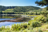 Sunny Pond in Maine Wilderness — Stock Photo