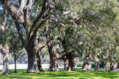 Green Grass Under Sunny Oaks — Stock Photo