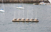 Six Small Sailboats Moored in Harbor — Stock Photo