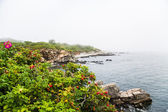 Colorful Plants on Rocky Coast.jpg — Stock Photo