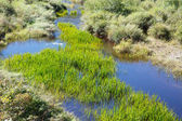 New Grass in Blue Pond — Stock Photo