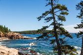 Pines Along Rocky Coast by Blue Sea — Stock Photo