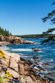 Flowers and Trees on Rocky Shore — Stock Photo