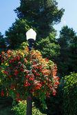 Flower Baskets on Lamp Post — Foto de Stock