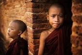 Two Novice monk — Stock Photo