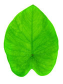 Yam leaf — Stock Photo