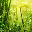 Misty tropical green mossy rainforest - Stock Photo