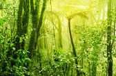 Misty tropical green mossy rainforest — Stock Photo