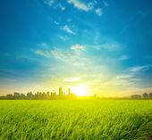 Pirinç alanında bayındırlık ve şehir — Stok fotoğraf
