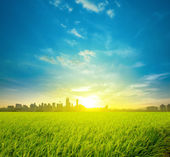 Rice field plantation and city — Stock Photo
