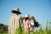 Rear view Group of Traditional Asian farmers — Stock Photo