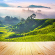 Tea Plantations — Stock Photo #28087975