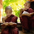 Myanmar little monk reading book outside monastery — Stock Photo