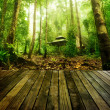 Green forest — Stock Photo #32864201