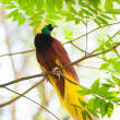 Bird of Paradise on a tree — Stock Photo