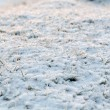 Abstract natural background with dry grass in snow — Stock Photo #16513629