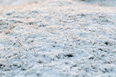 Abstract natural background with dry grass in snow — Stock Photo