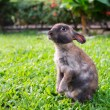 Stock Photo: Little rabbit in the garden grass